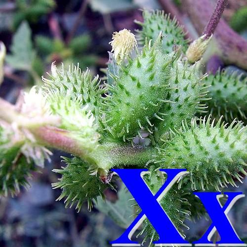Wikijunior Alphabet Des Fleurs X Wikilivres
