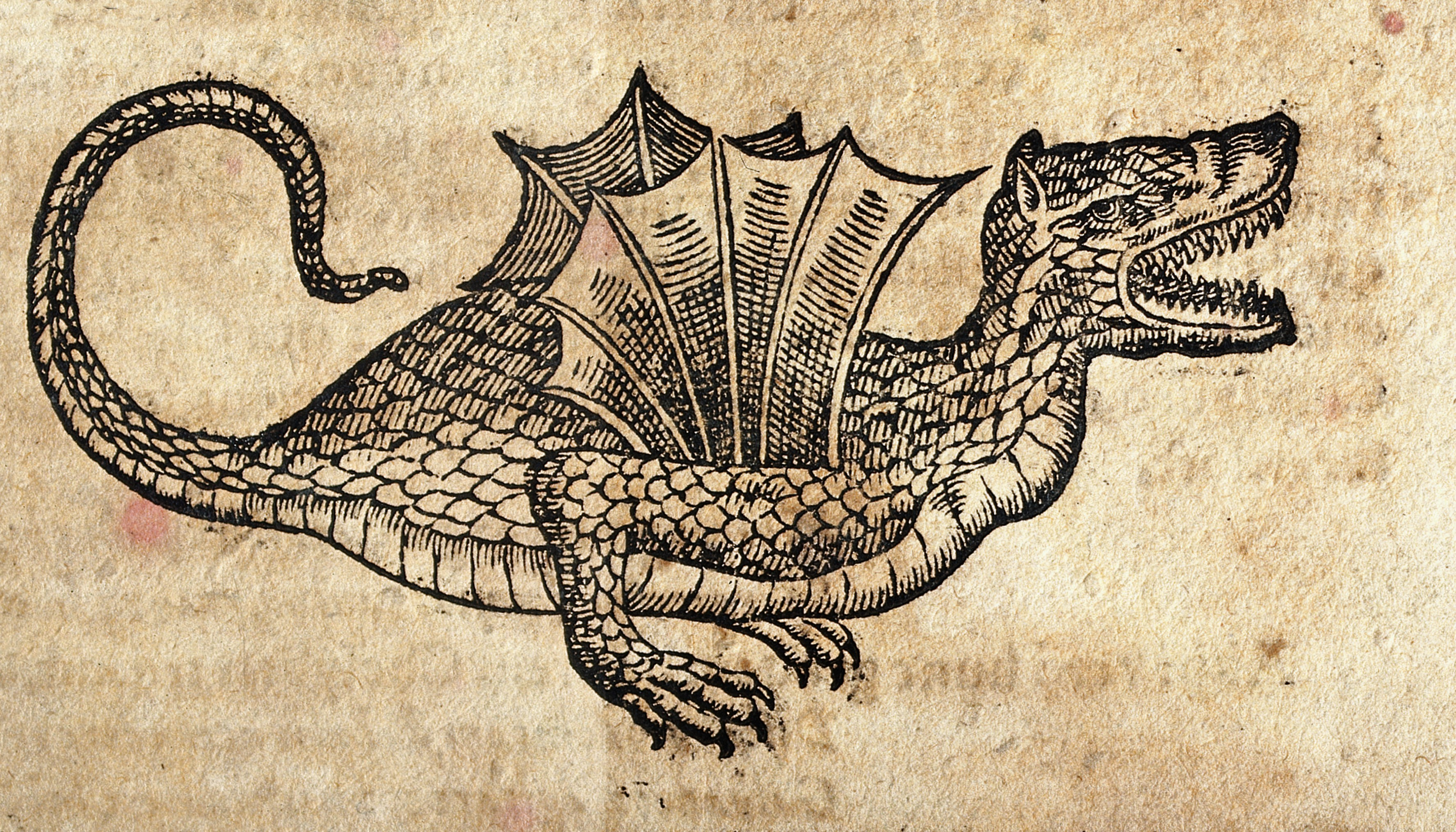 Image result for dragon woodcut