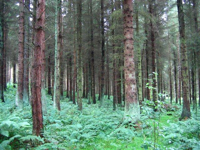 Beecraigs Woods. - geograph.org.uk - 65258