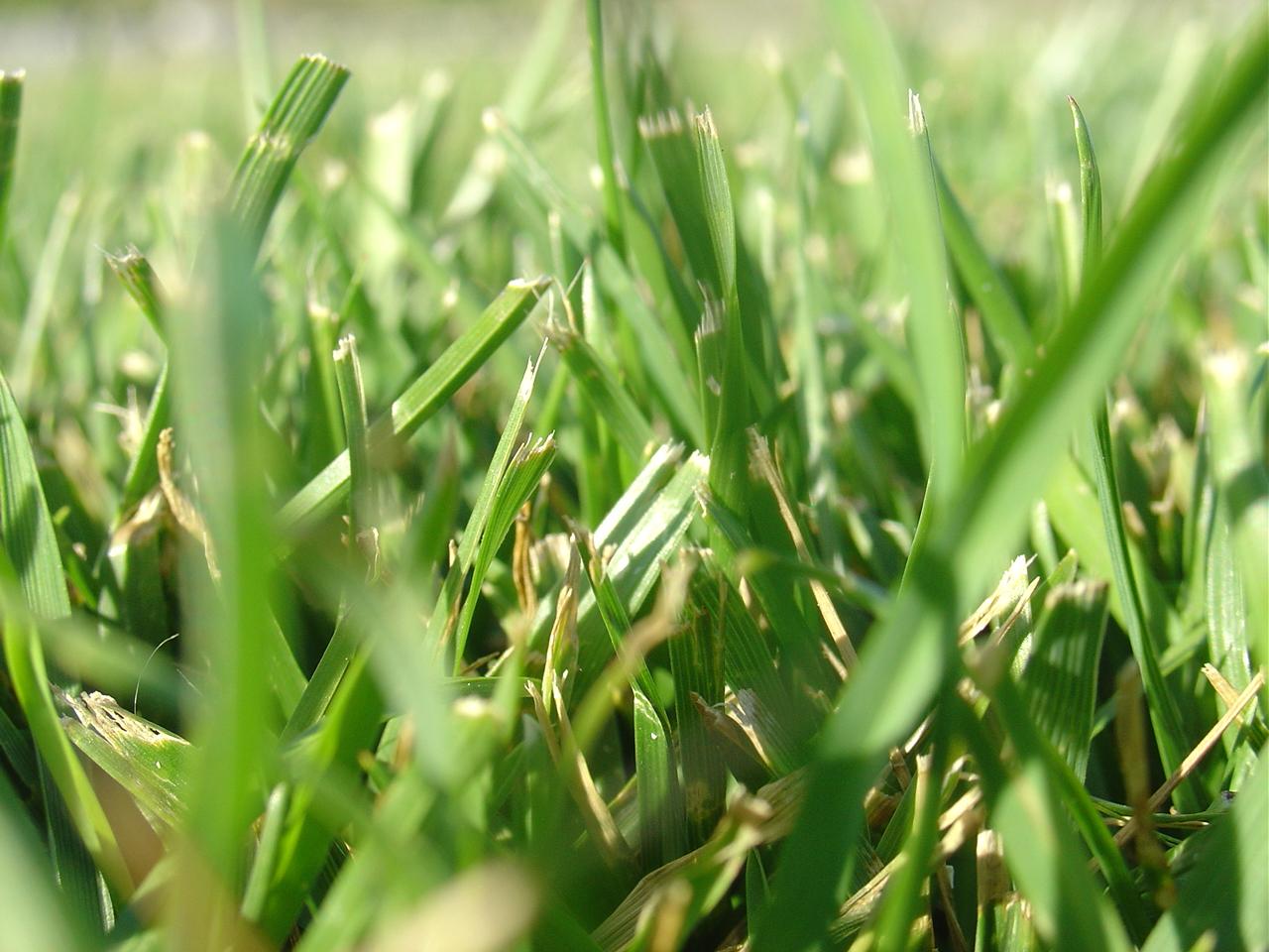 KOSZENIE TRAWNIKA ogród łobzów krzysztof jakubowski kraków
