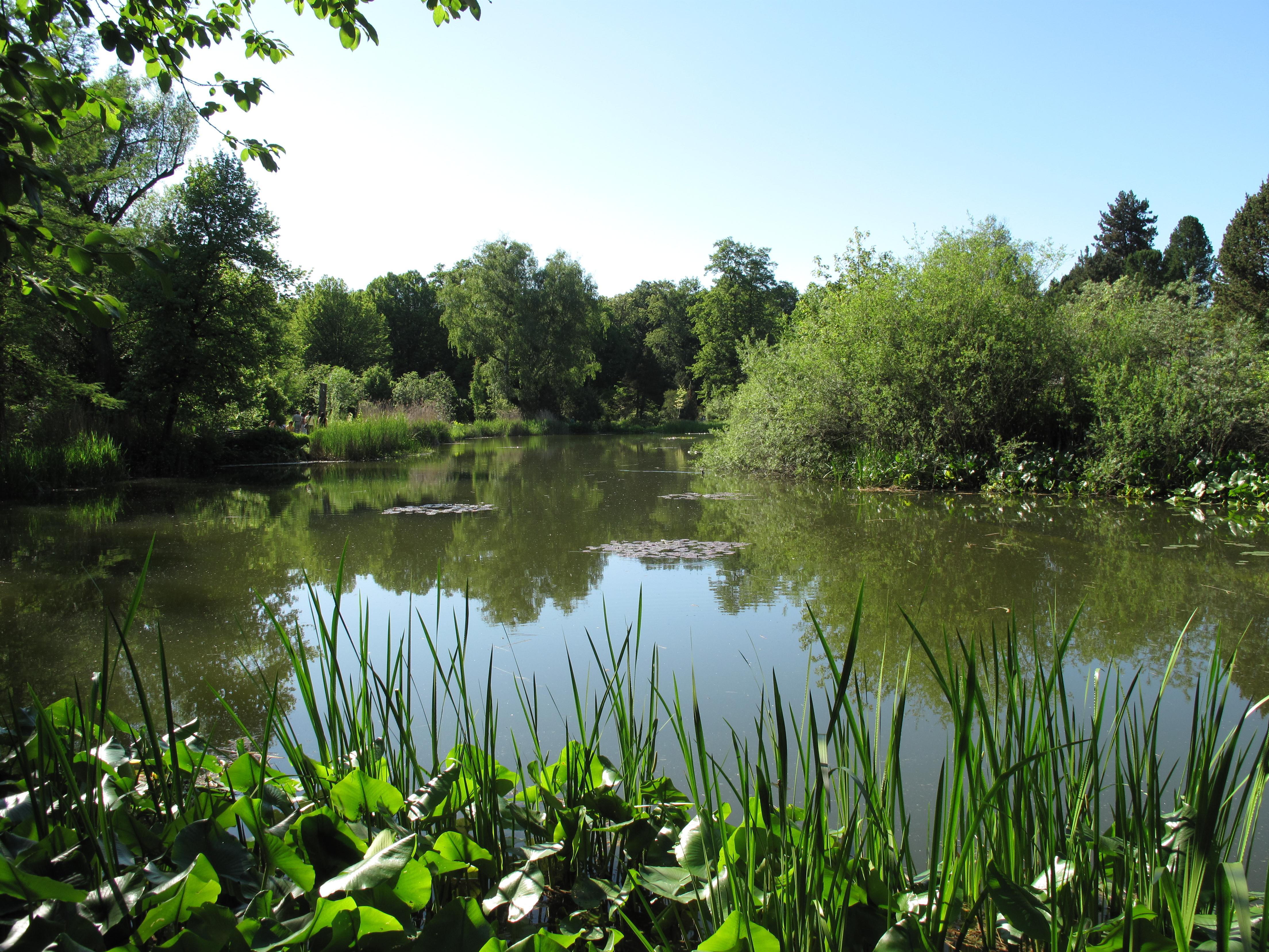 Botanischer Garten München-nymphenburg ? Wikipedia Garten Dezember Wo Was Verbessern