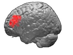 Prezenty mózg
