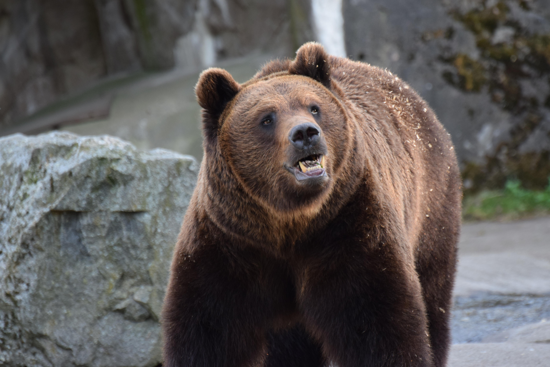эпатажной певицы самые большие известные медведи фото них вырабатываются