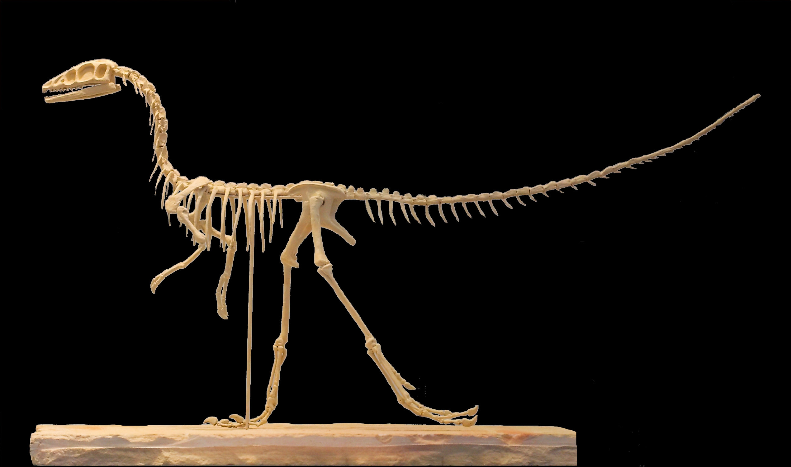 http://upload.wikimedia.org/wikipedia/commons/c/cd/Compsognathus_longipes_skeleton_reconstruction_munich.jpg