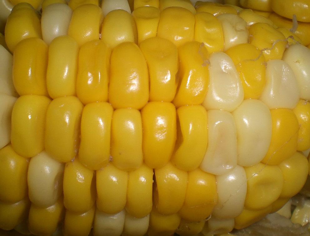 Cooked food maize corn 1 jpg