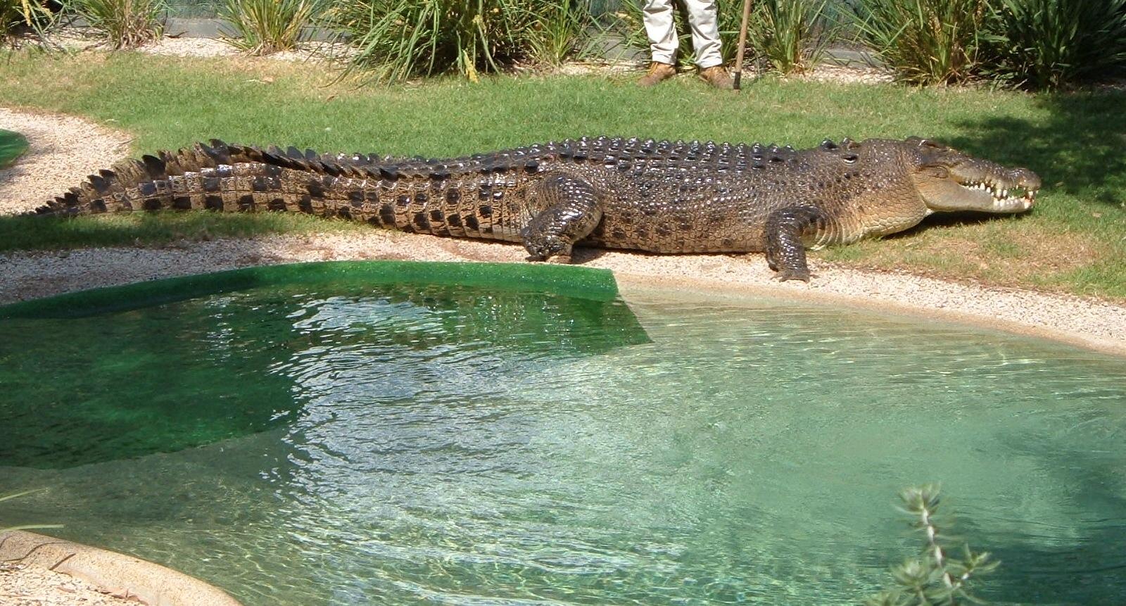 страницы информация самый большой крокодил в мире фото вас есть