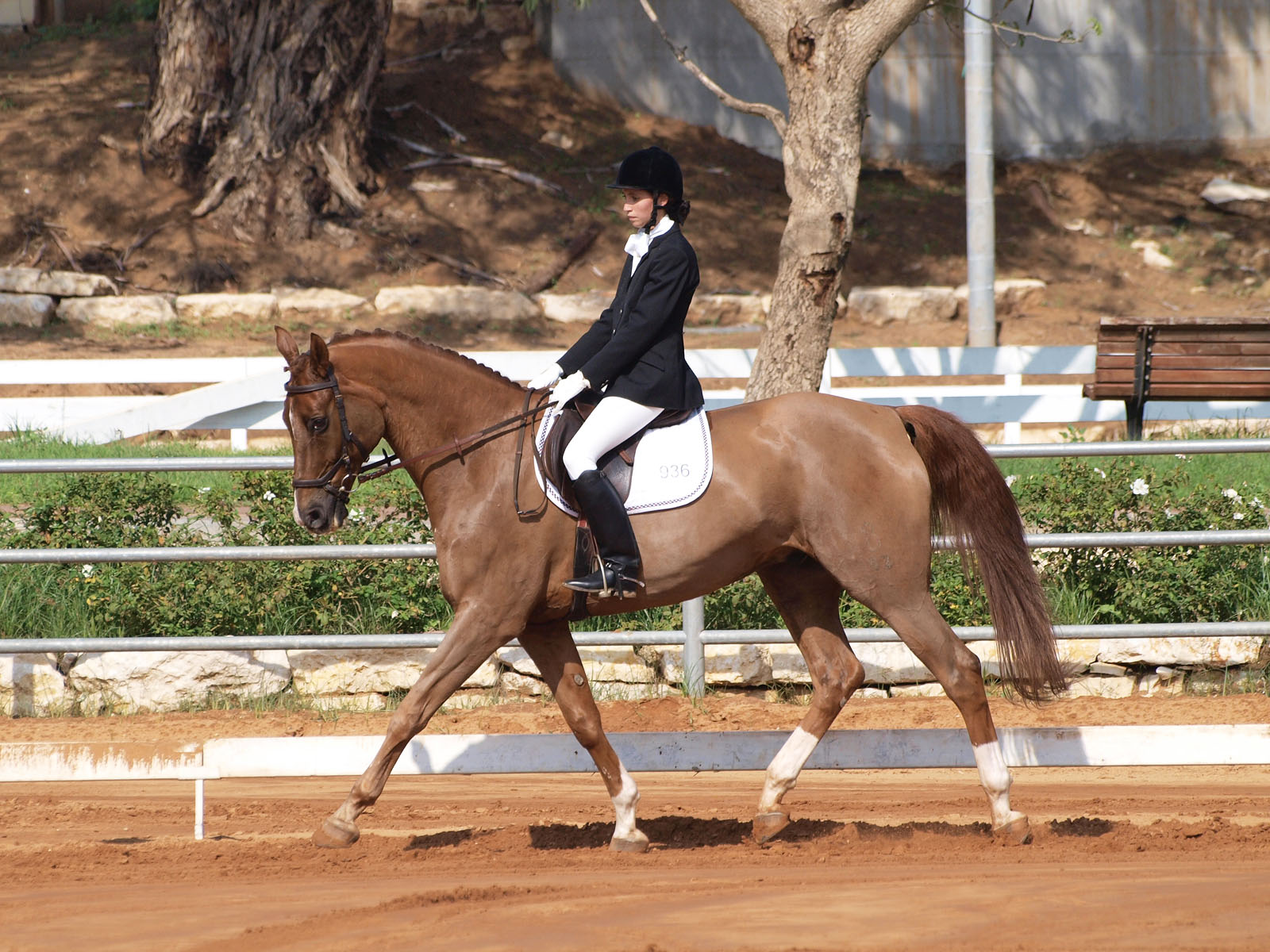 File:Dressage Competition Horse Rider.JPG - Wikimedia Commons