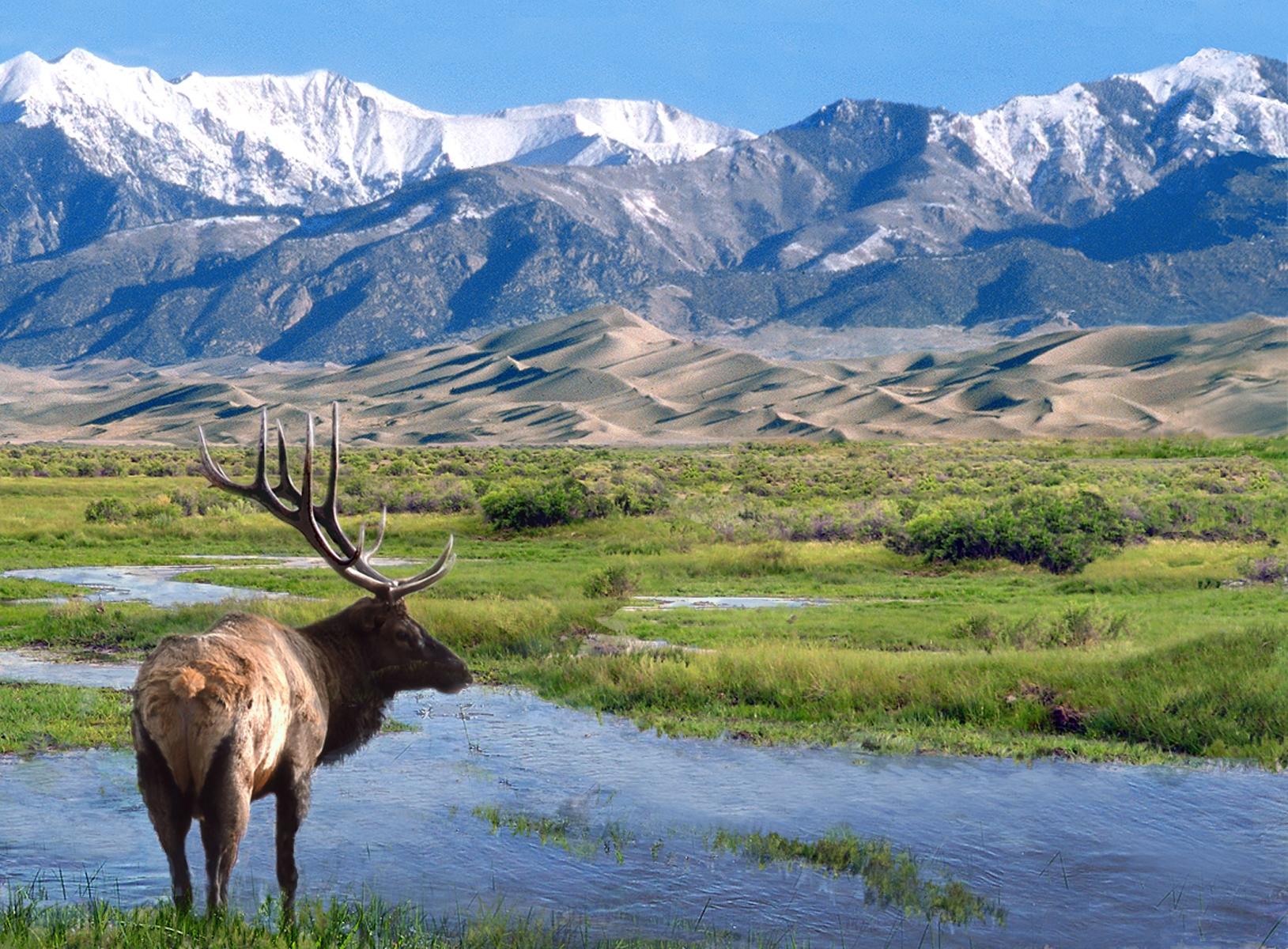 Moose, Water, Grass, Sand Dunes, Mountains
