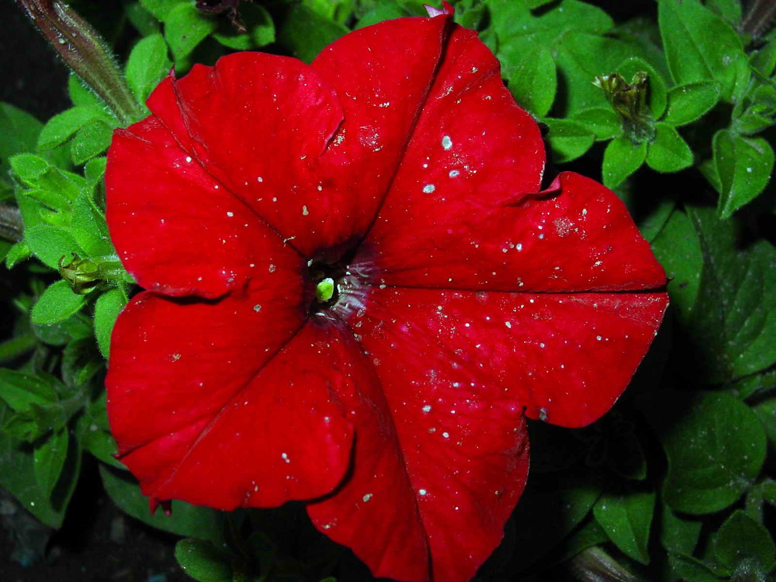 Flor De Le