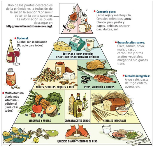 File:Harvard food pyramid es.jpg - Wikimedia Commons