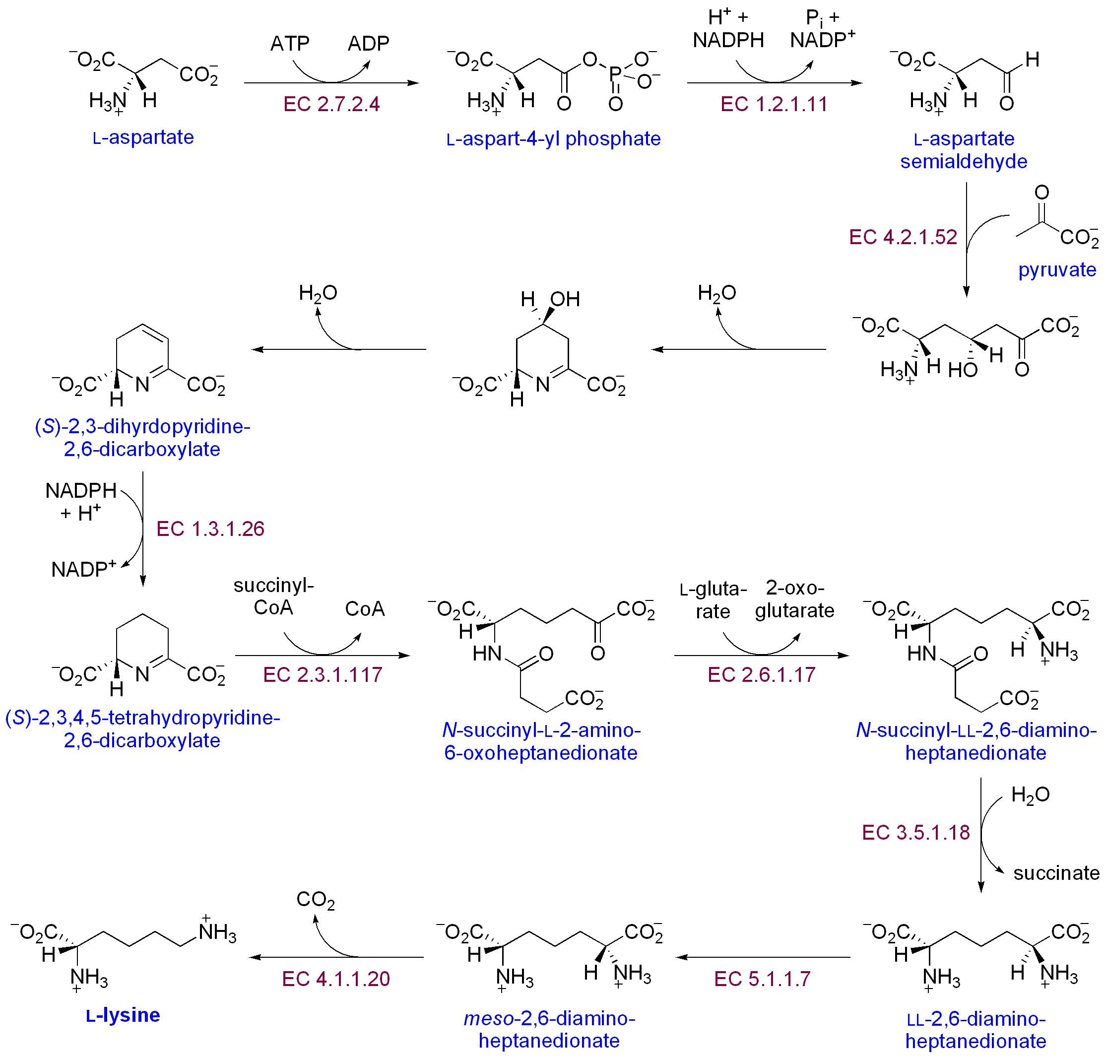 Synthesis of 5-methylisophthalic acid