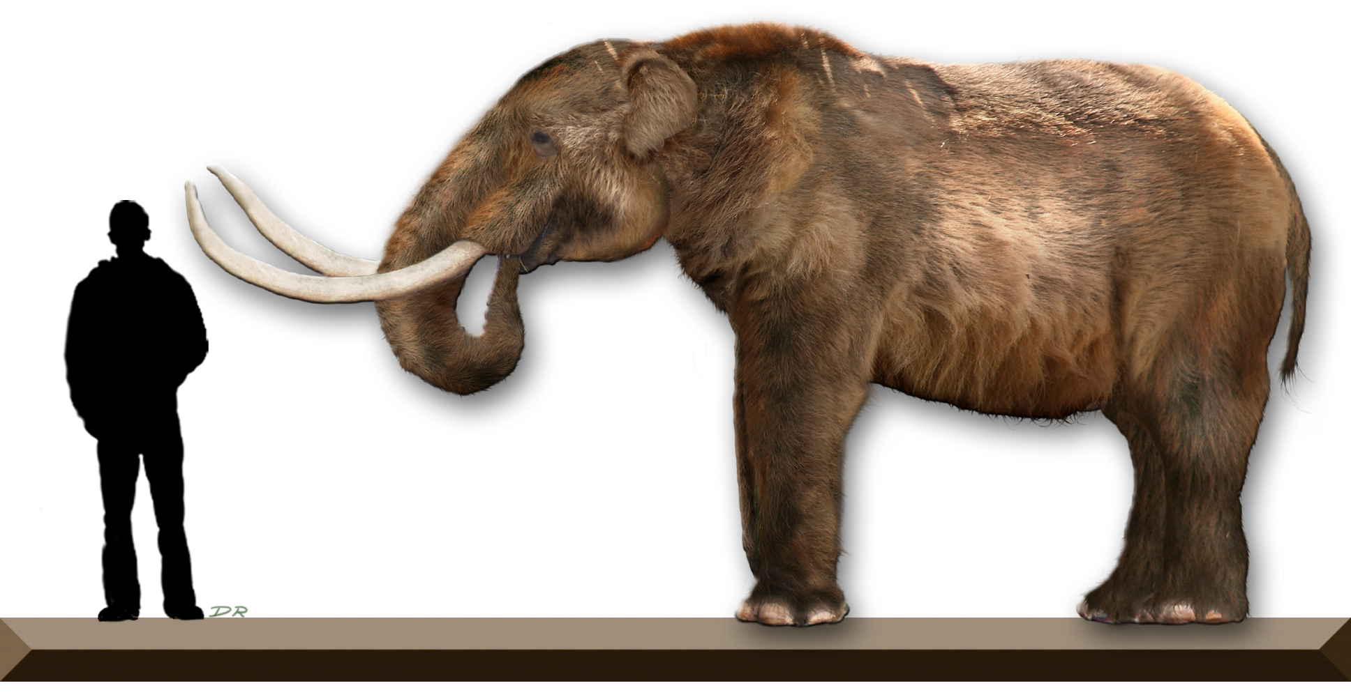 Image Gallery Mastodon Size - 751.8KB
