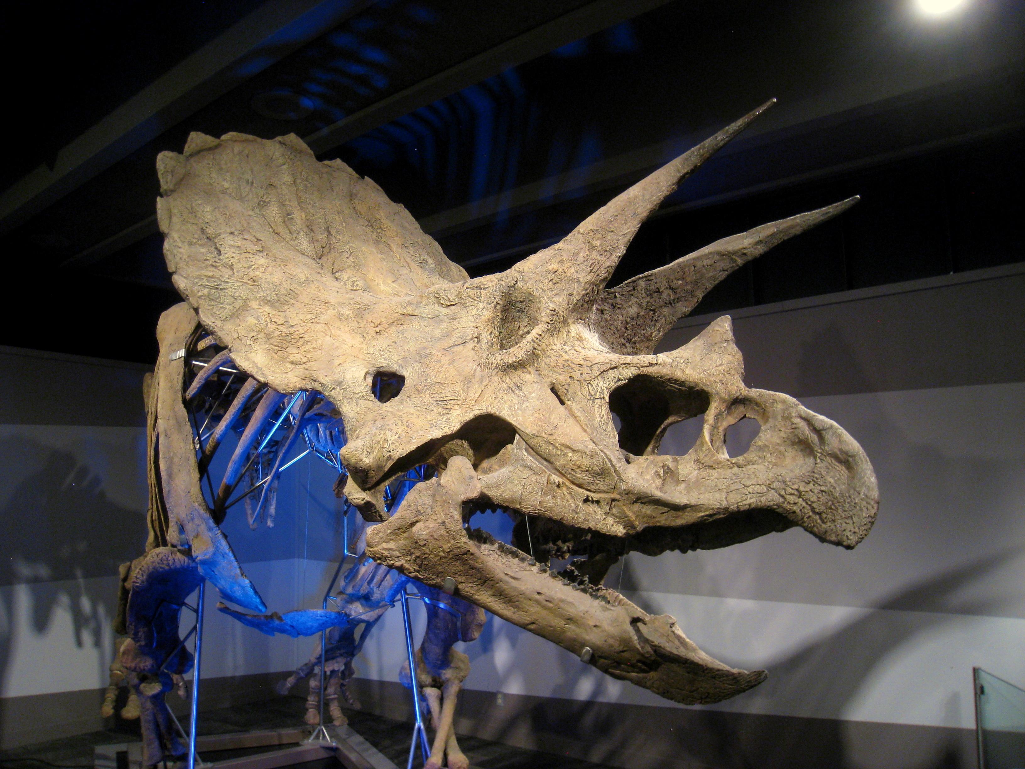 File:Museum of Science, Boston, MA - IMG 3206.JPG