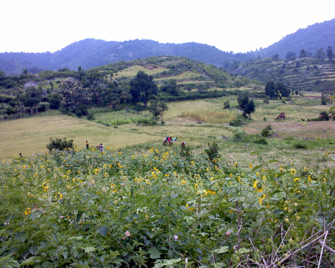 http://upload.wikimedia.org/wikipedia/commons/c/cd/Nature_view_of_jawadhu_hills.jpg