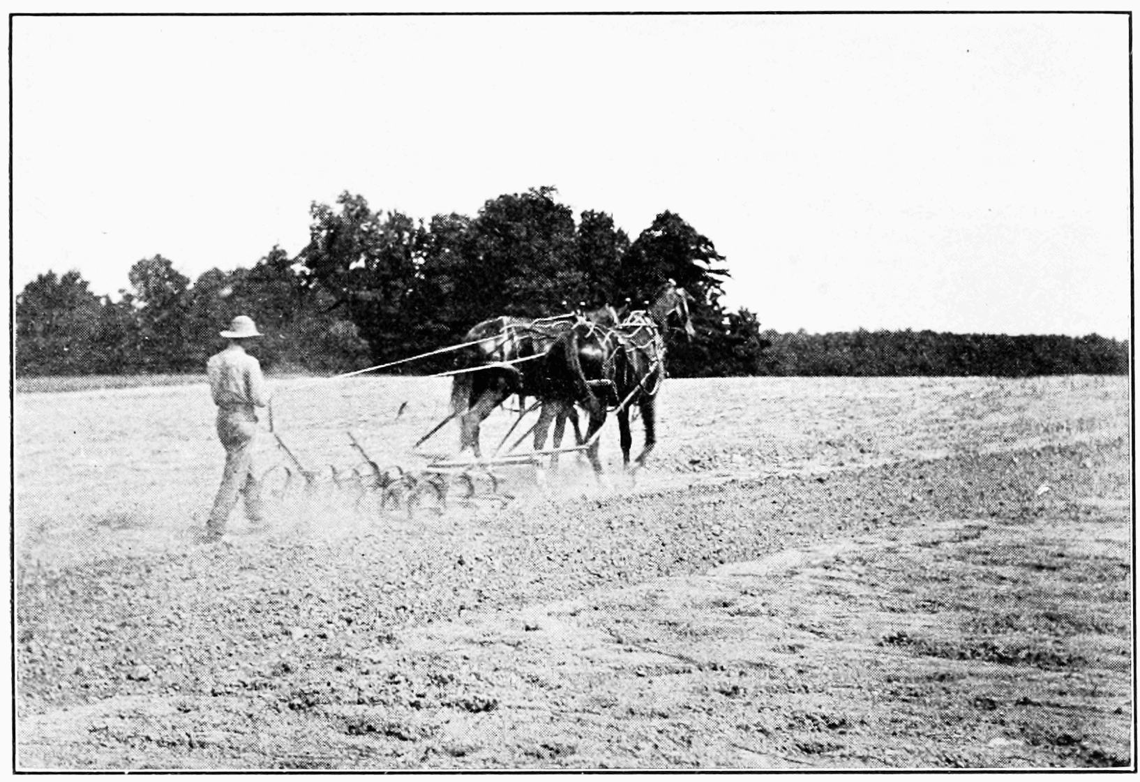 PSM V73 D411 Third year preparing the field for wheat.png