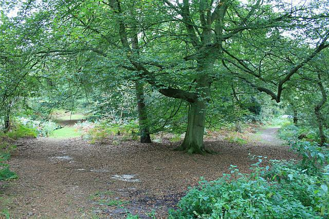 Paths on Abinger Roughs - geograph.org.uk - 1509099