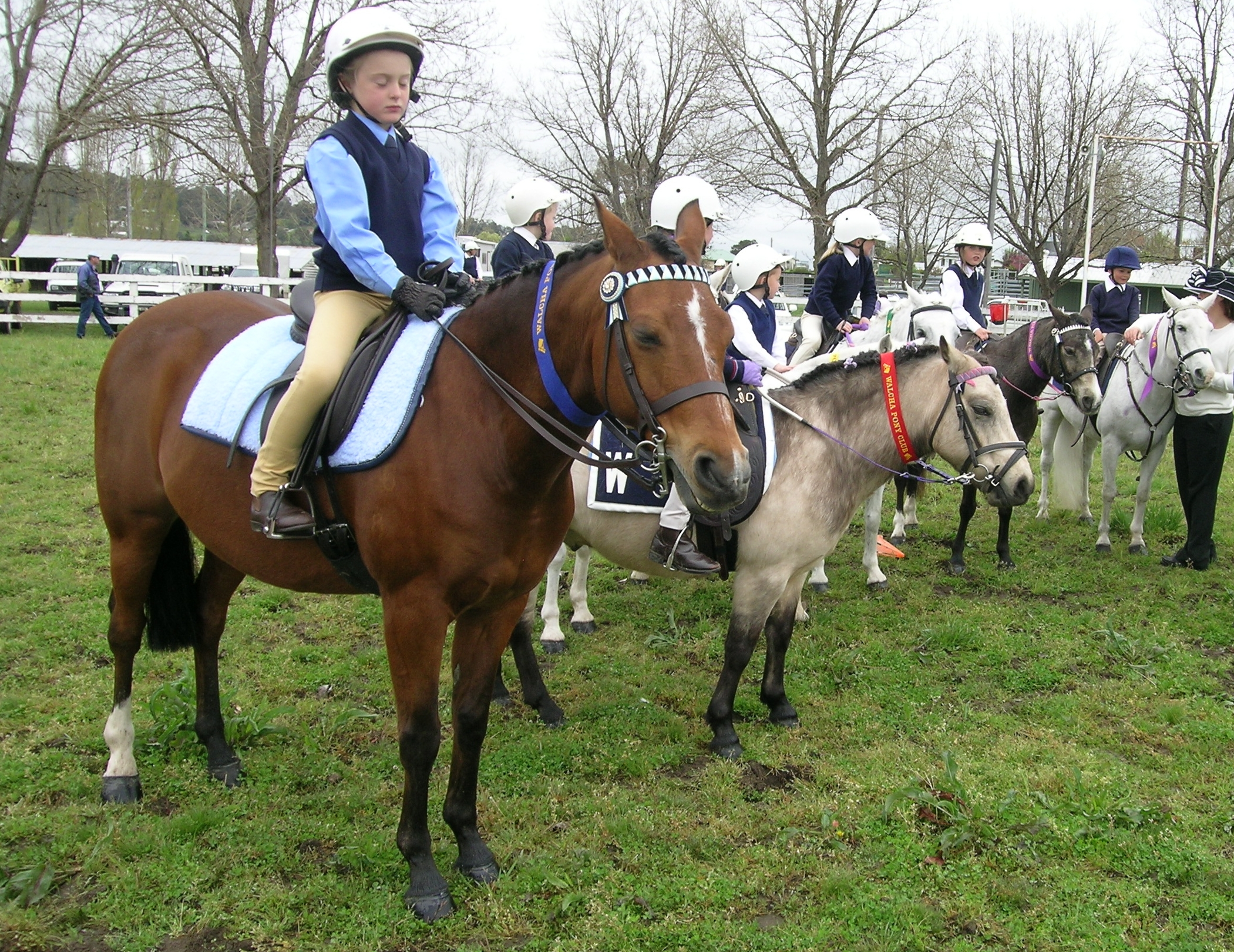 File:Pony club gymkhana.JPG - Wikipedia