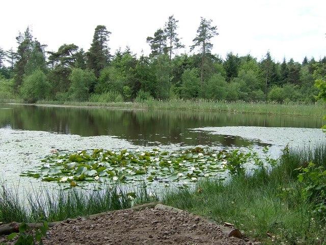 Pysgodlyn Mawr, Hensol Forest - geograph.org.uk - 444096