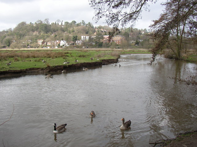 River Wey at Godalming - geograph.org.uk - 146006