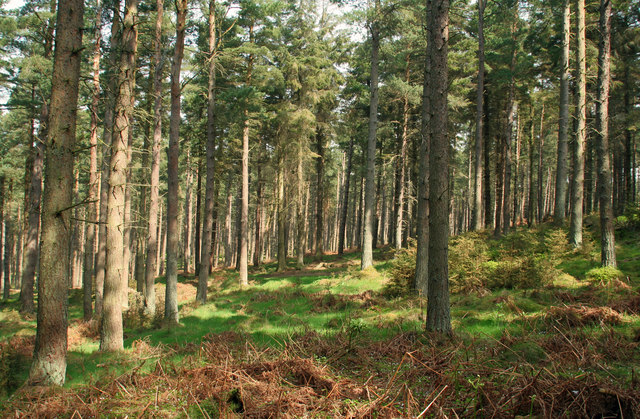Slaley Forest - geograph.org.uk - 796588
