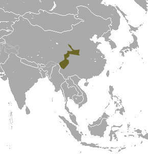 Greater stripe-backed shrew Species of mammal