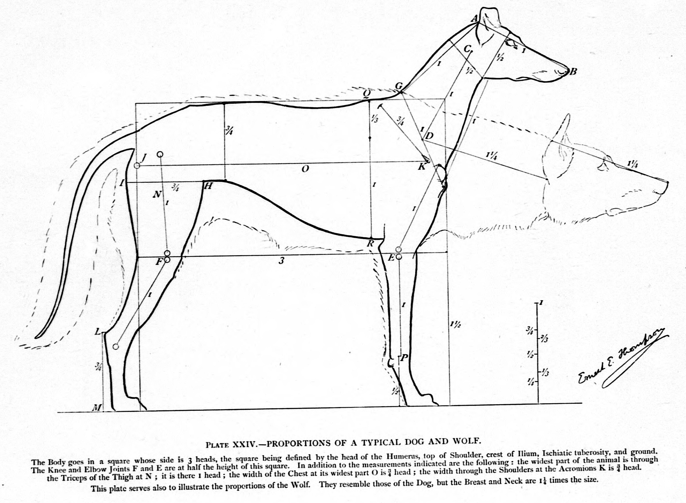 Filestudies In The Art Anatomy Of Animals Microform Being A