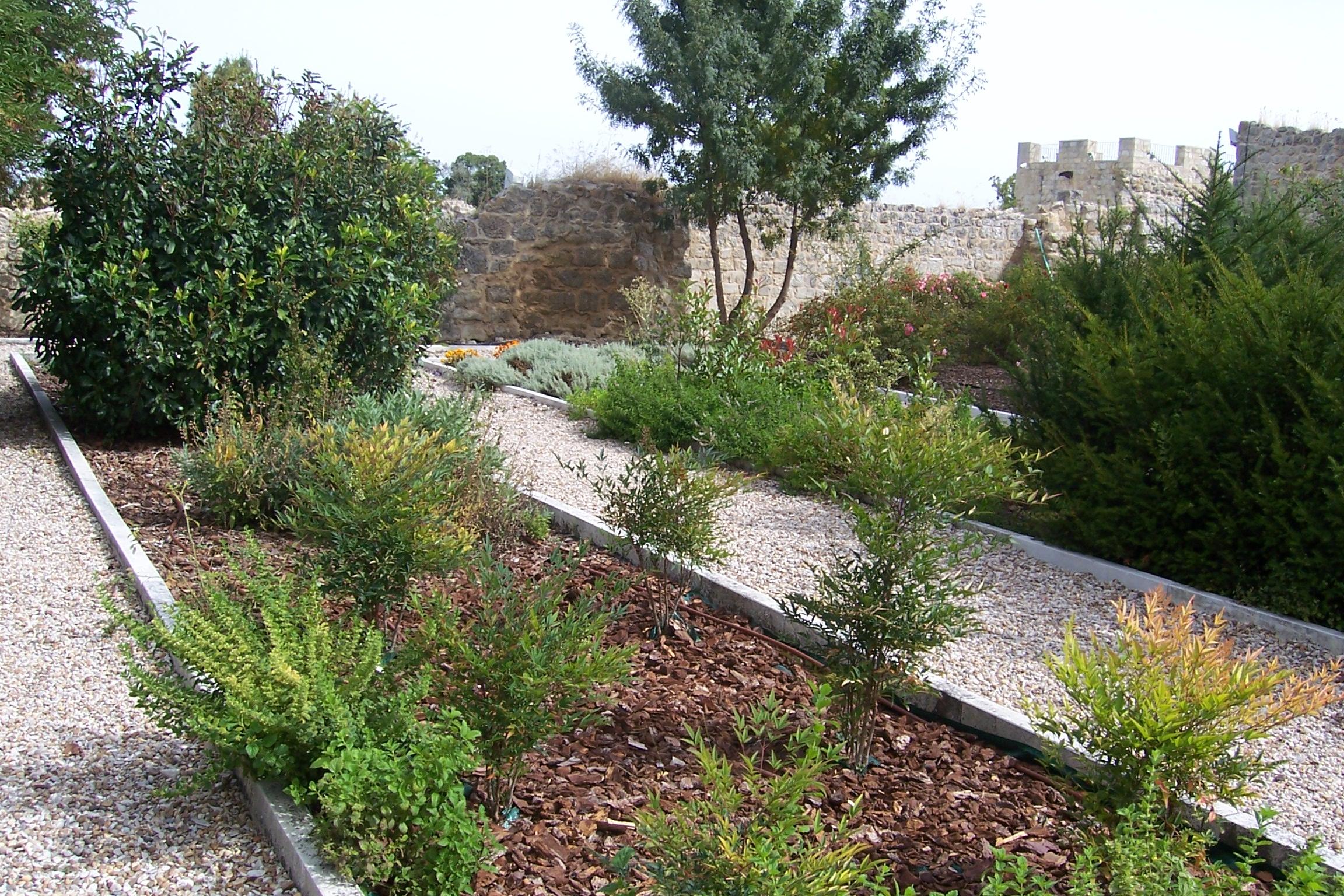 Plantas aromaticas de jardin finest como cultivar plantas for Jardin de plantas