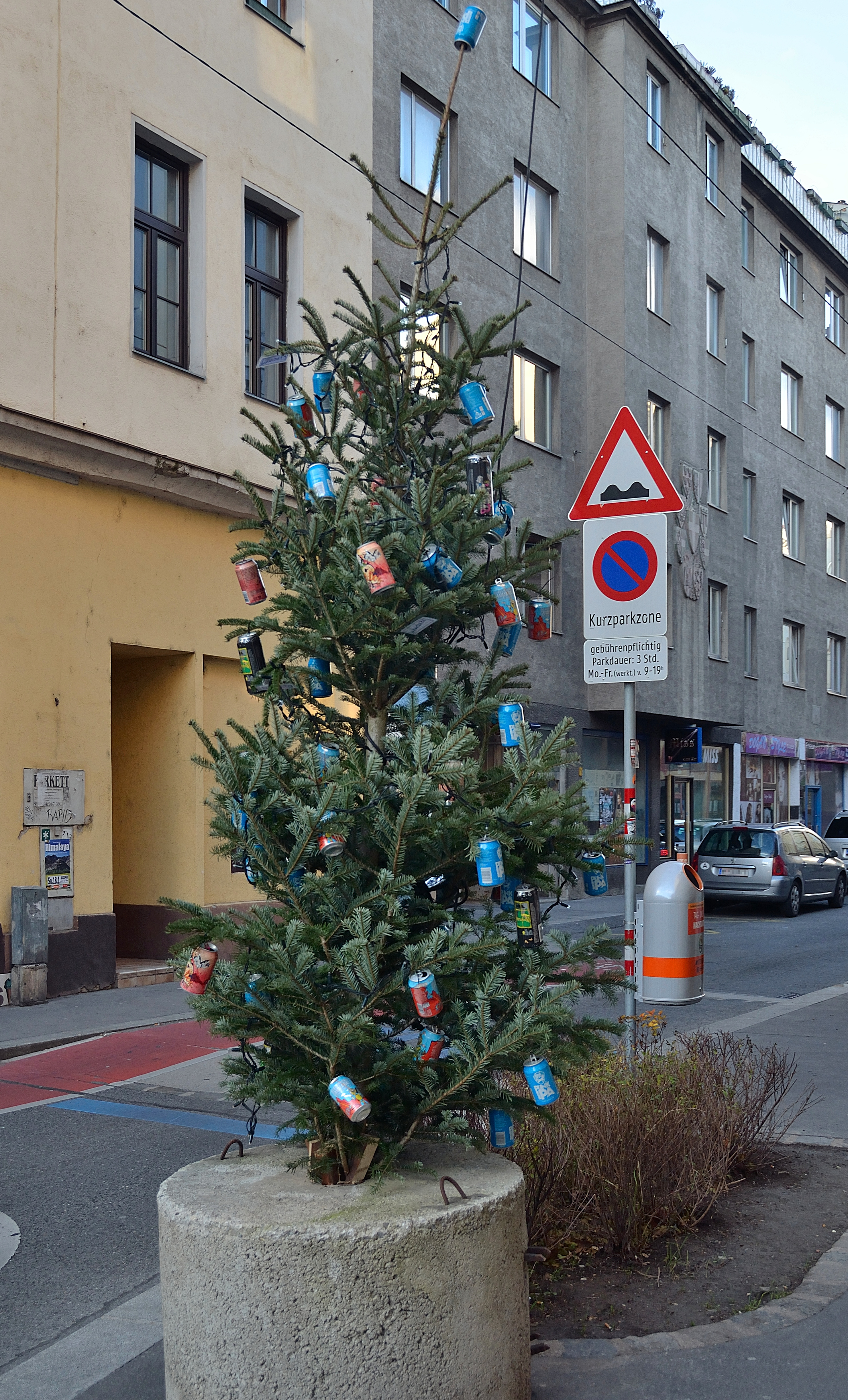 Filex Mas Tree Reindorfgasse Viennejpg Wikimedia Commons