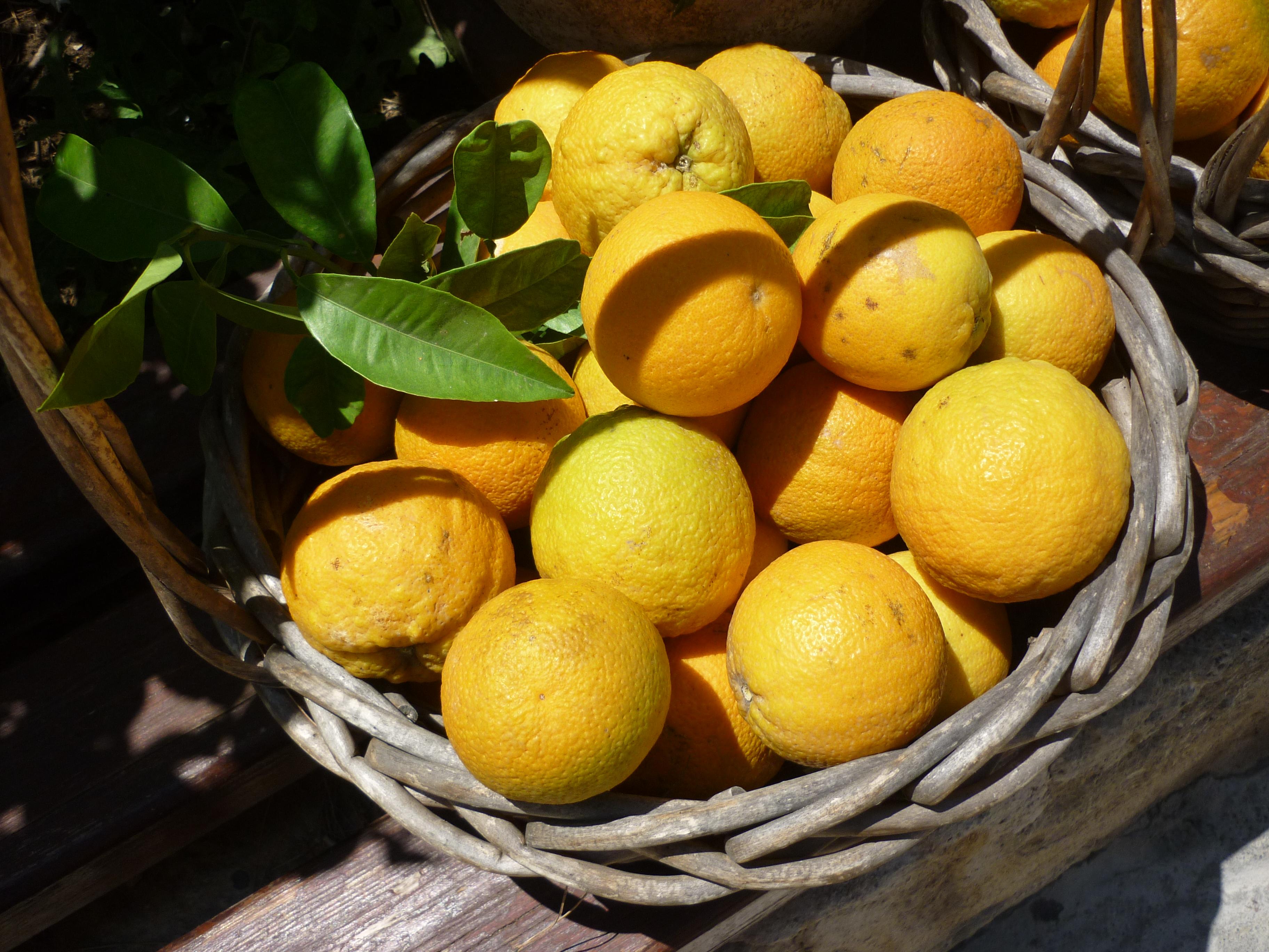 http://upload.wikimedia.org/wikipedia/commons/c/ce/20120628_panier-oranges.jpg?uselang=fr