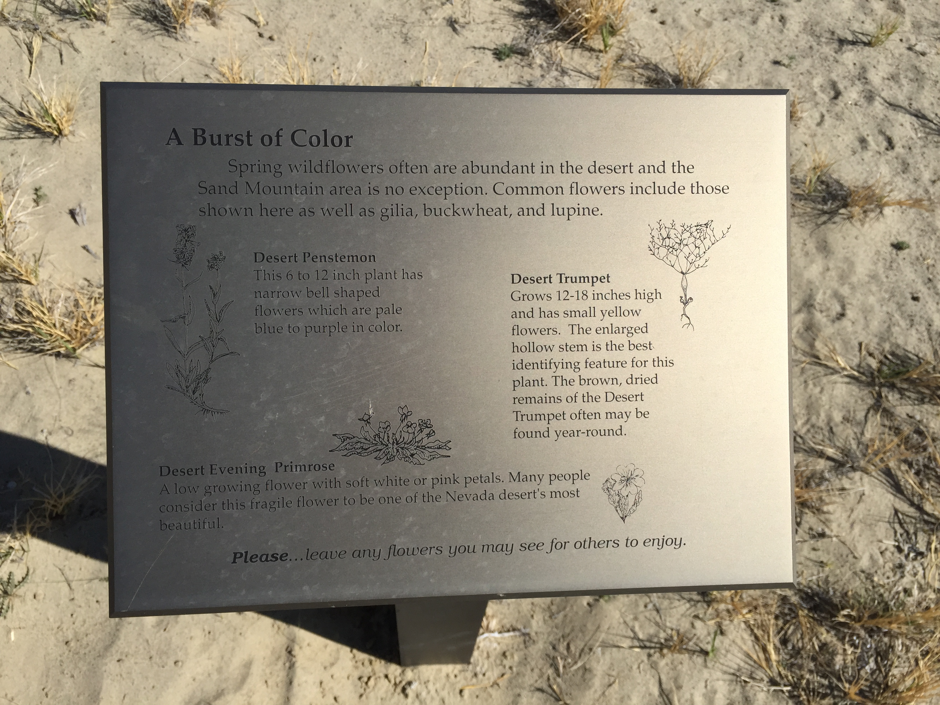File2015 04 02 15 52 02 A Burst Of Color Descriptive Sign Along The
