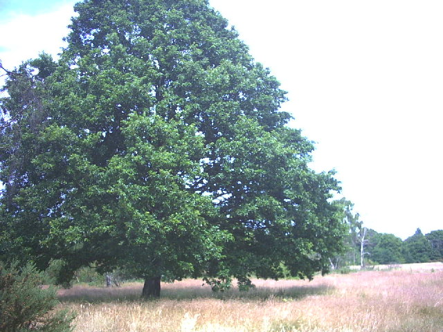 Barnes Common. - geograph.org.uk - 21034