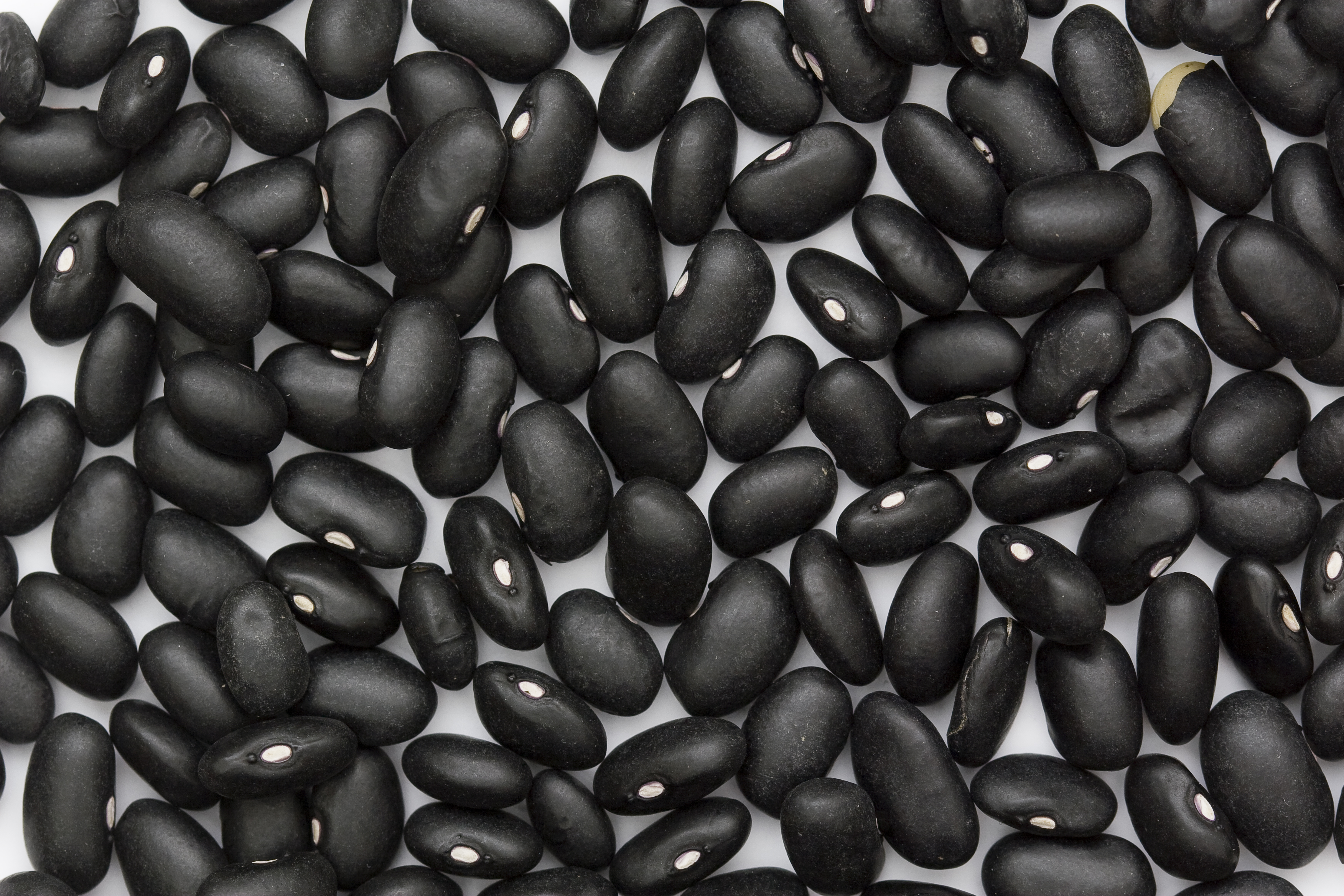 Indigestible oligosaccharide found in beans can increase bloating, gas, and discomfort.