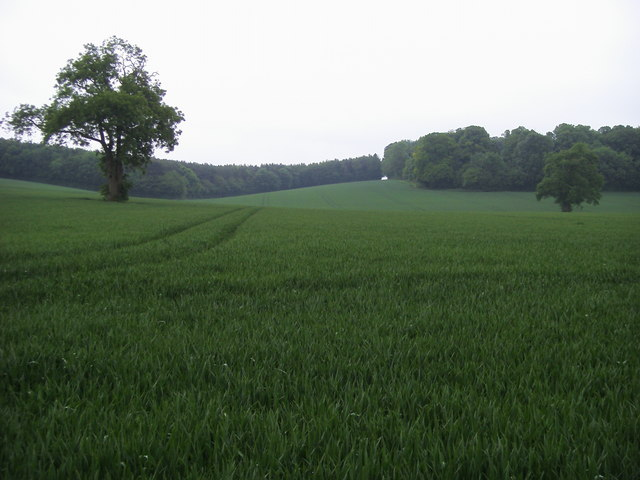 Breaches Wood - geograph.org.uk - 828808