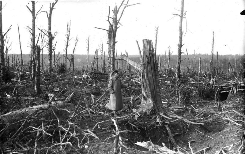 Herbstschlacht: zerschossener Wald in den Argonnen