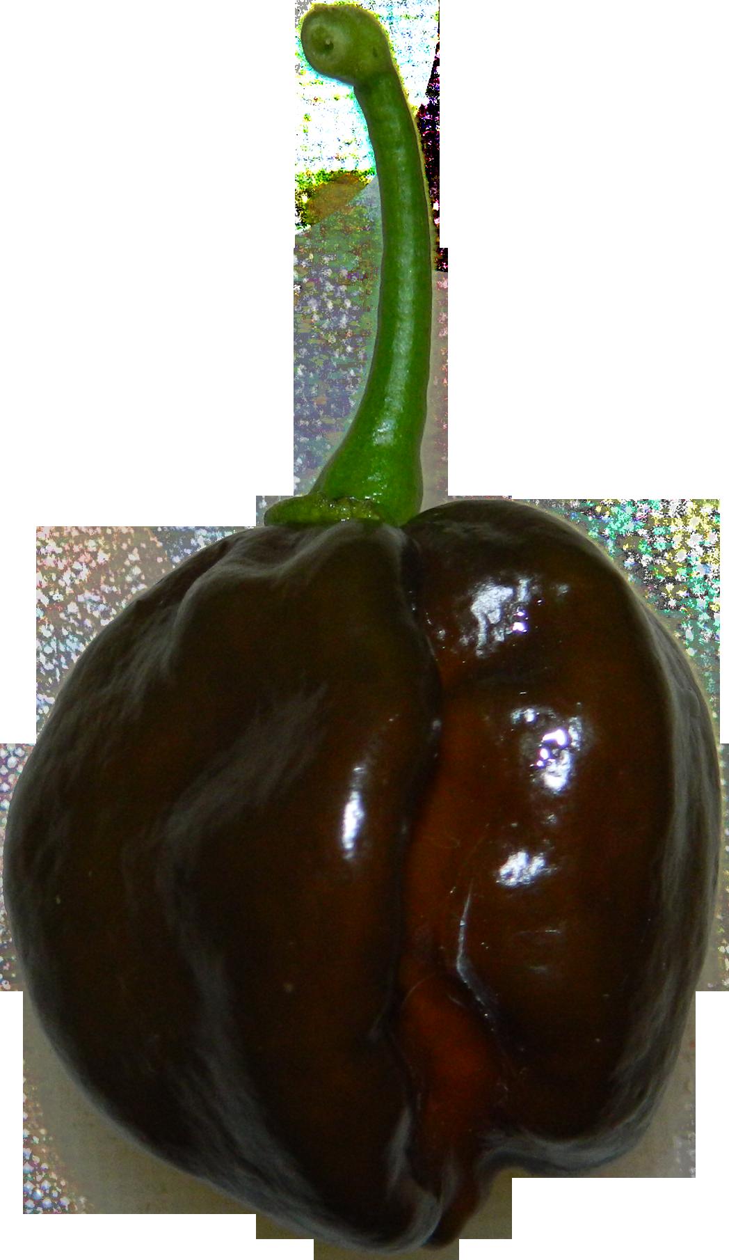 File:Chocolate habanero.png