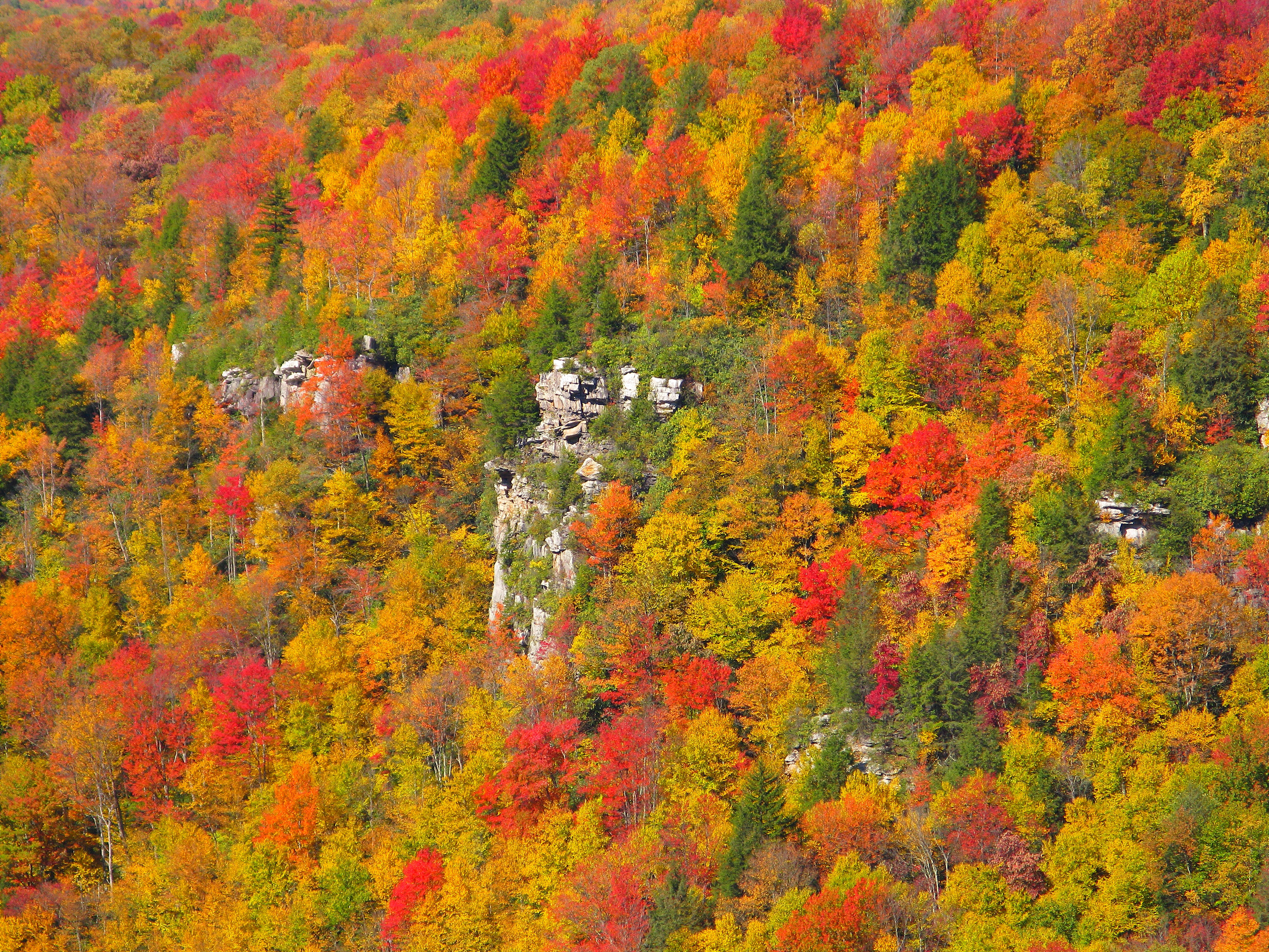 File cliff fall colors blackwater canyon west virginia for West fall