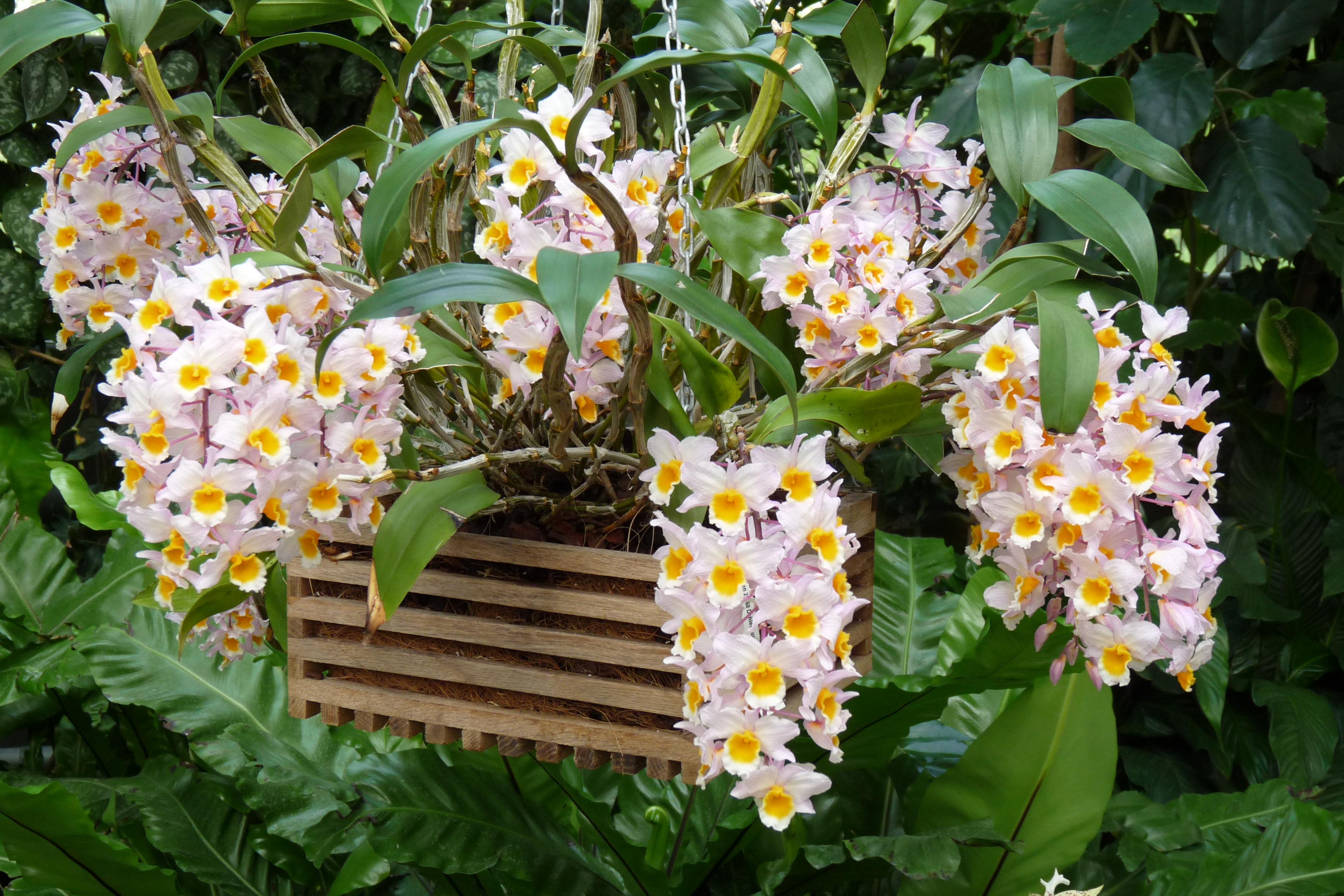 Tipos de orqu deas y sus cuidados canalhogar for Cuidados orquideas interior