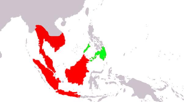 Cynocephalus volans (verde); Galeopterus variegatus (rojo)
