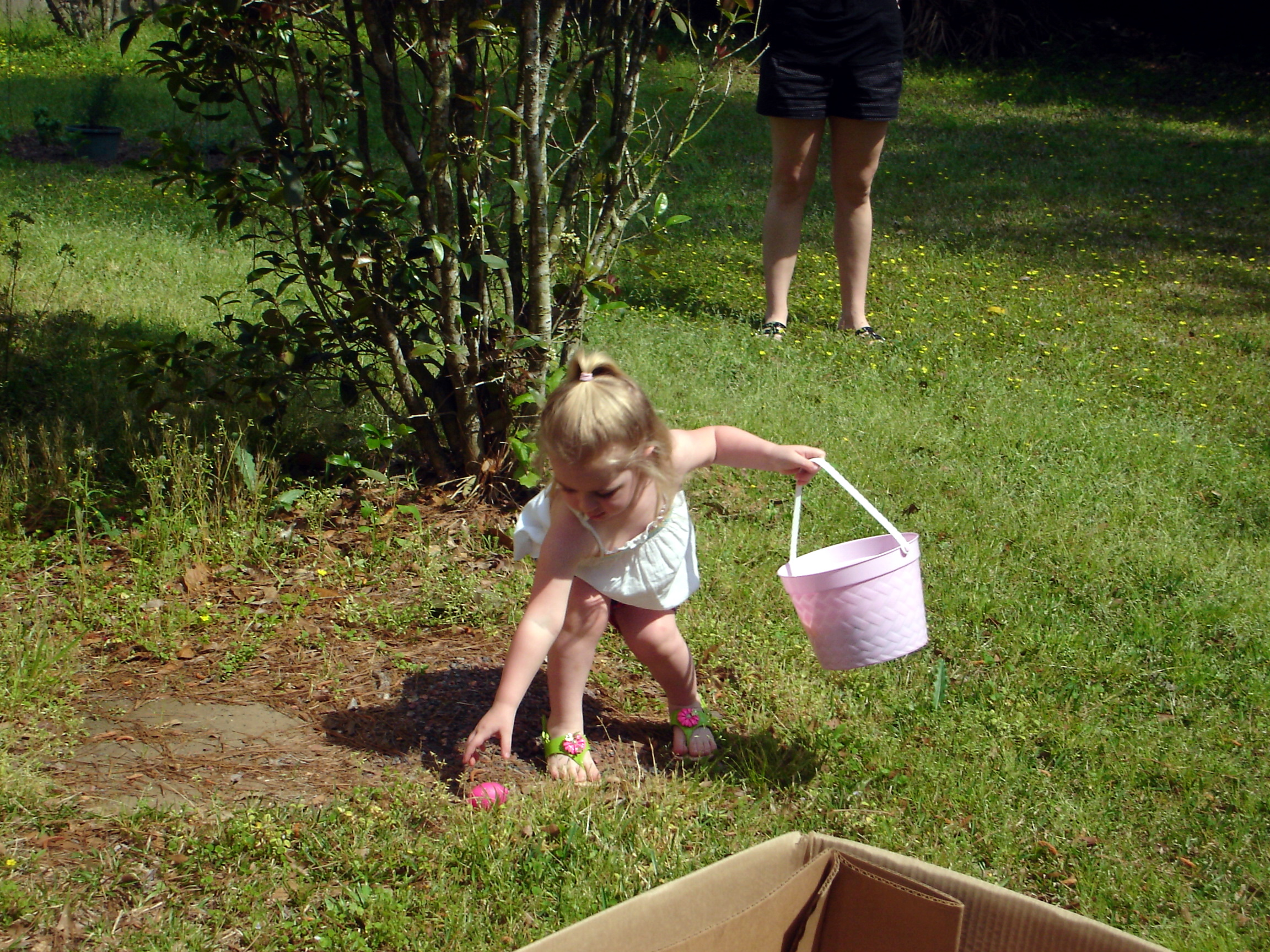 Image Result For Egg Hunt