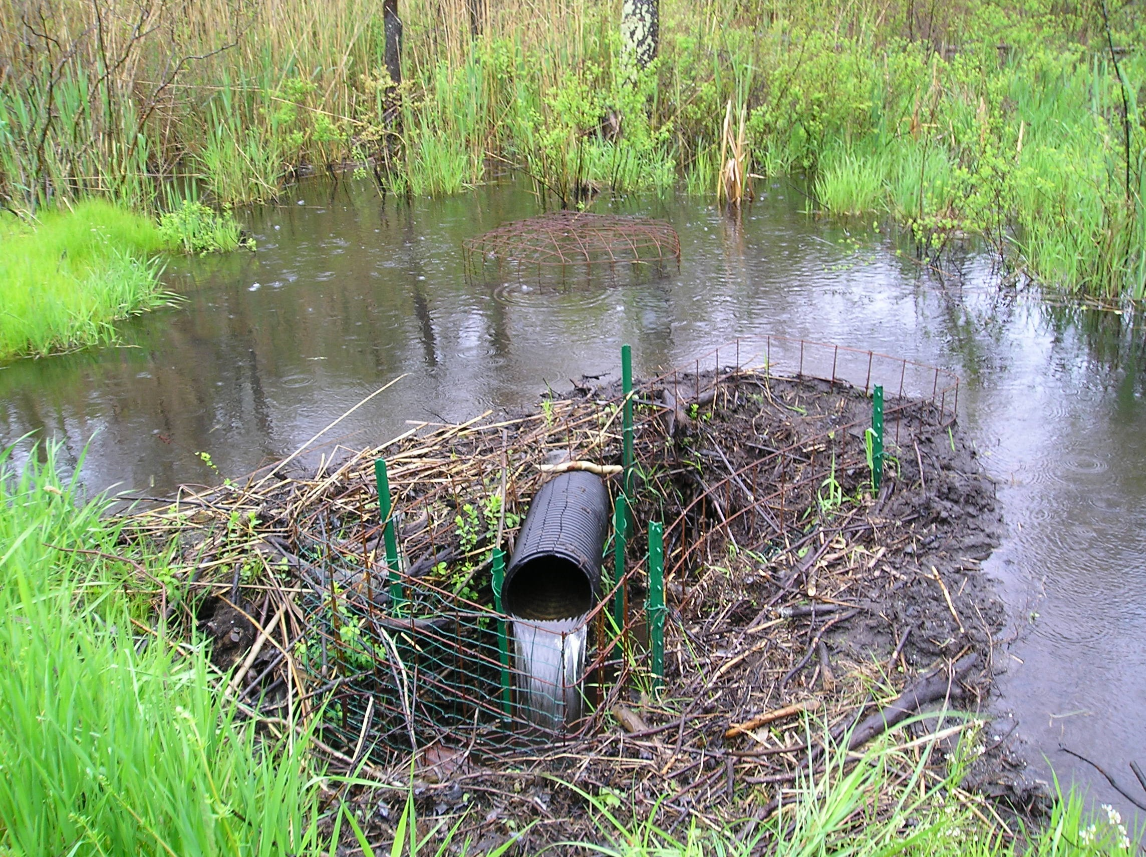 how to control the water level behind a beaver dam in massachusetts Beaver Dam Middle School by michael callahan