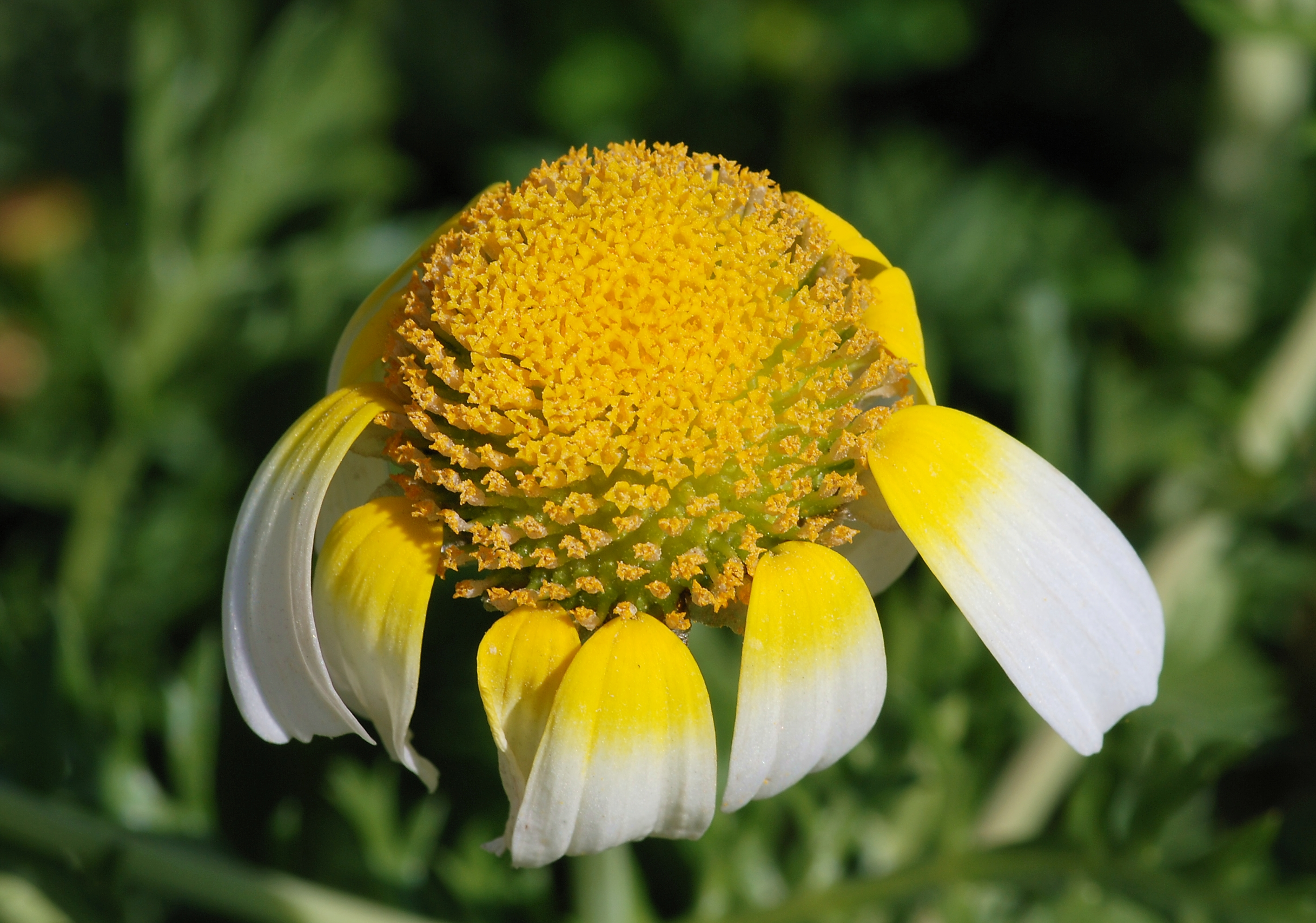 Be like the flexible, breezy daisy by keeping limber with stretching exercise.