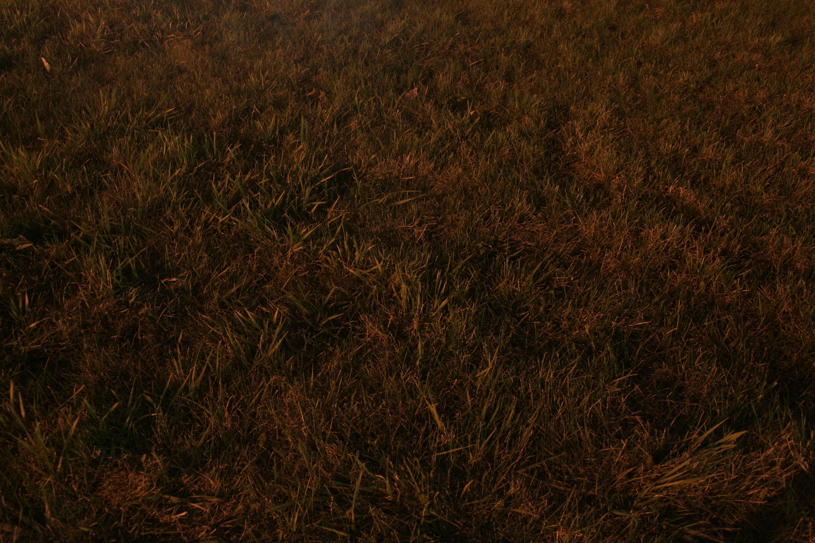 Ordinaire File:Grass @ Night (468593590)
