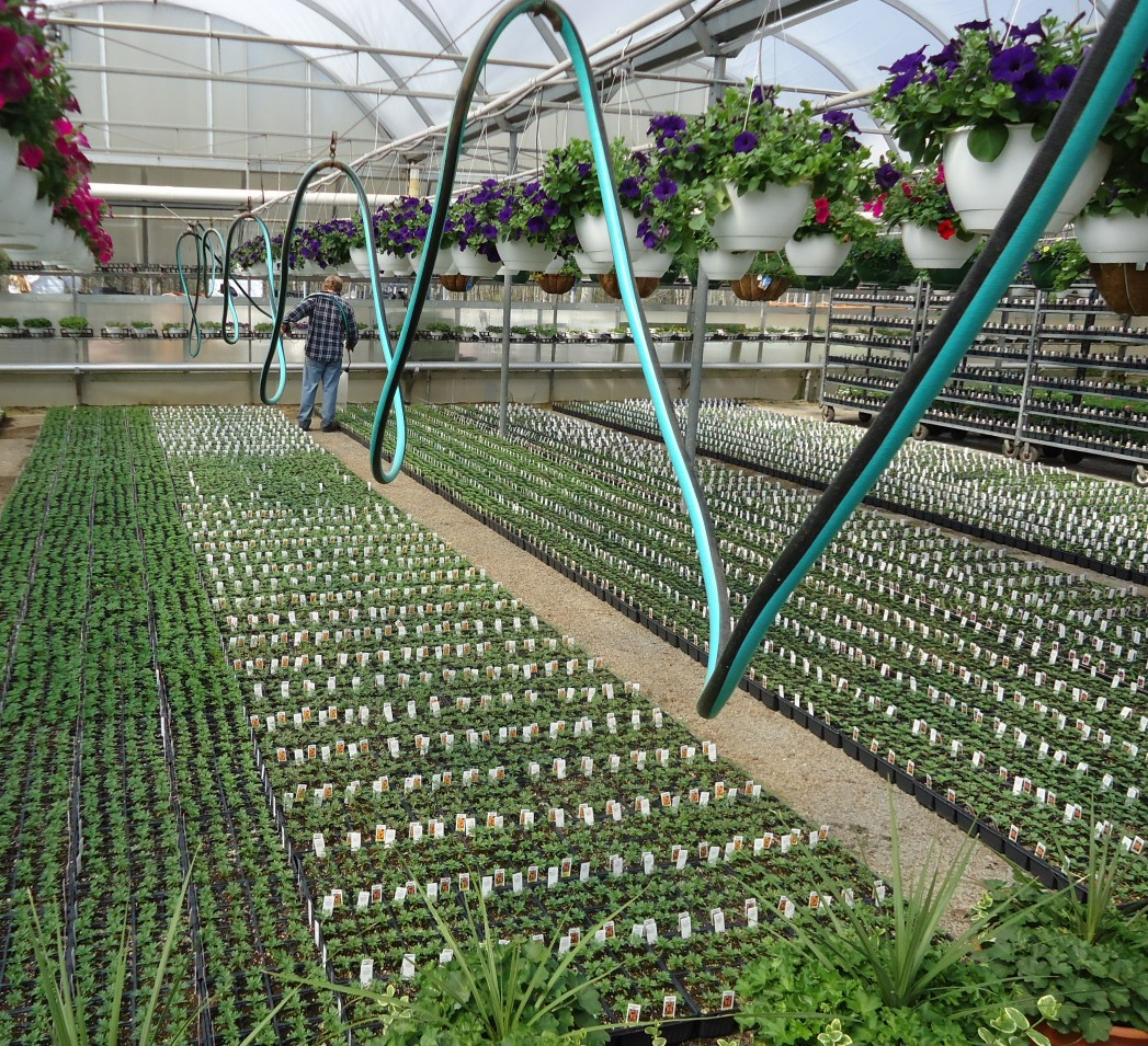 File Great Swamp Greenhouse Photos Coiled Watering Hose On Sliding Wire Jpg
