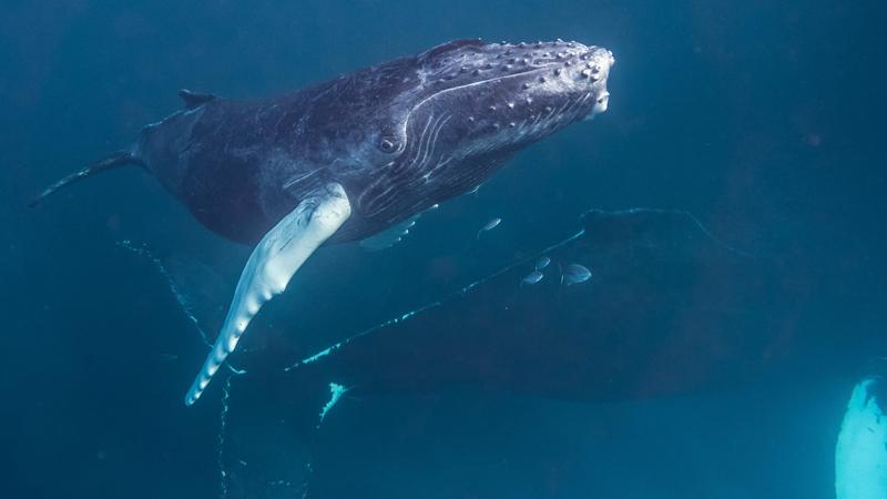 Big Island Whale Watching Zodiac