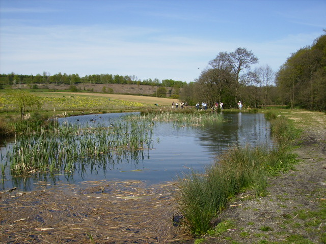Description Man made pond near Soulby Wood  geograph.org.uk  416035