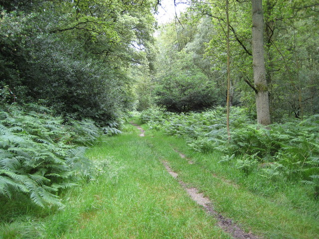 Naphill Common - geograph.org.uk - 887999