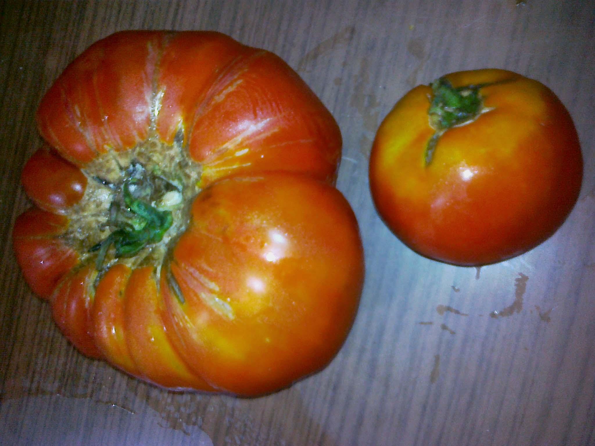 GMO and Natural