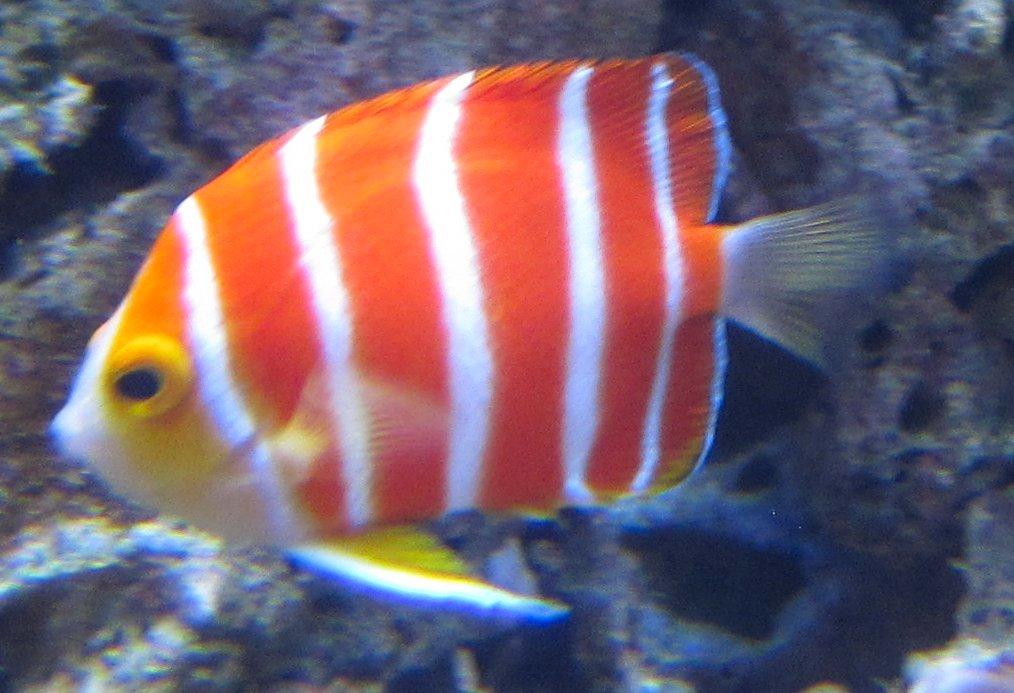 Image Result For Aquarium Par