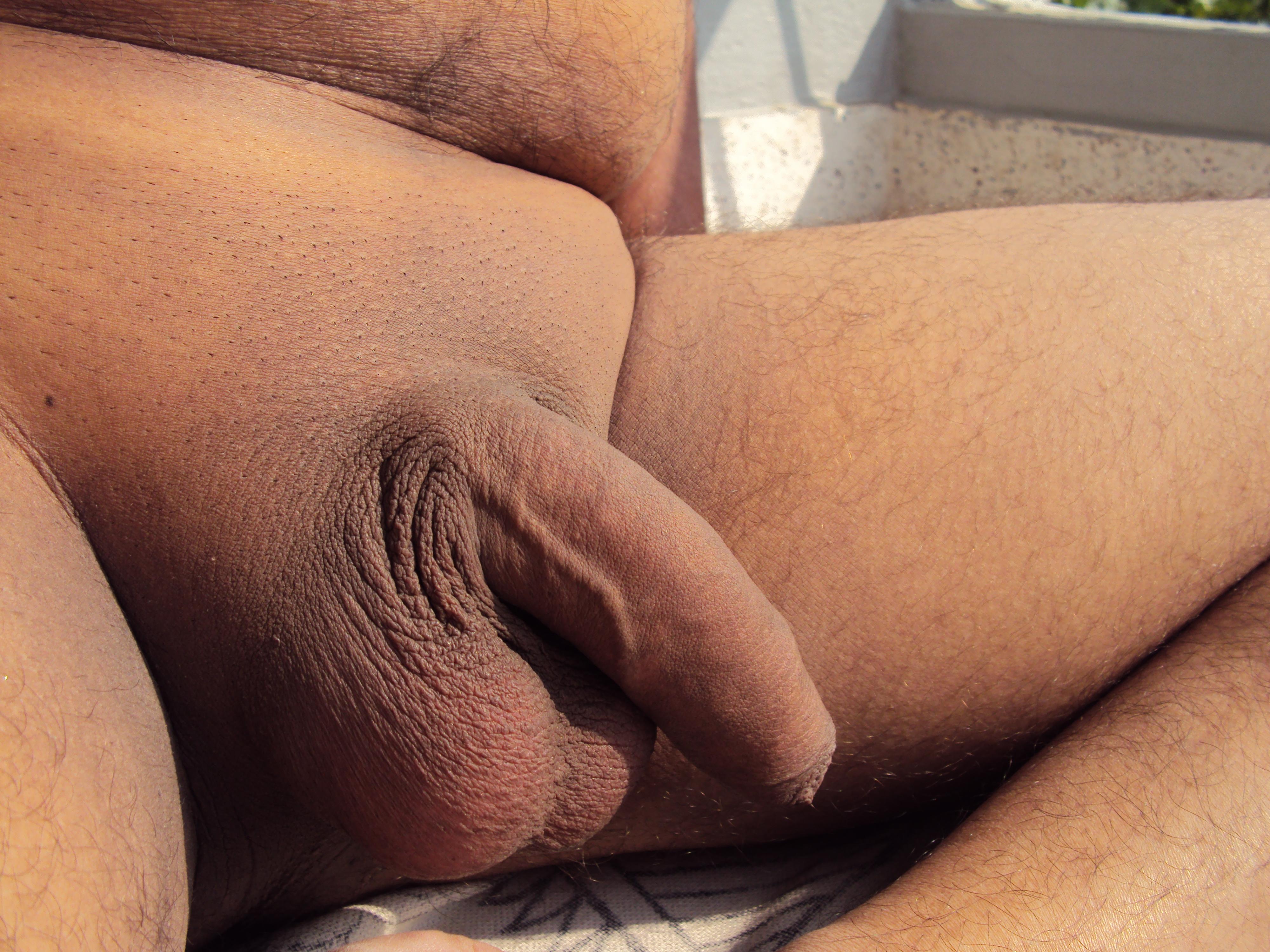 Erect Penis Average Size
