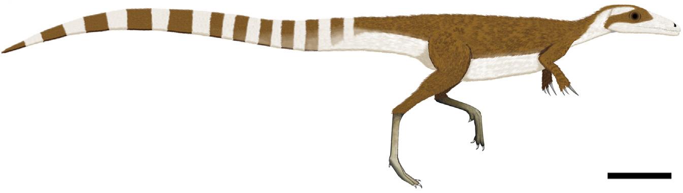 https://upload.wikimedia.org/wikipedia/commons/c/ce/Sinosauropteryx_color.jpg